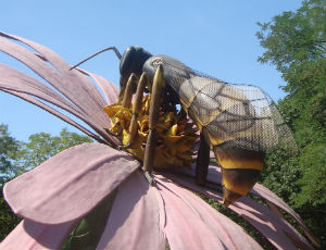 photo of a giant bee