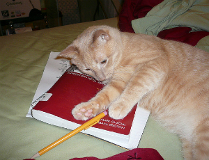 A cat lies on a notebook near a pencil